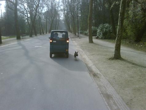 Hond_uit_laten