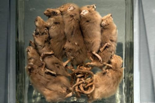 20210308-De-Pest-Museum-Het-Valkhof-Willem-Melssen-19-768x512